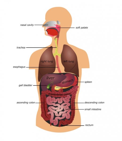 Gastrointestinal surgery or operations of the digestive tract